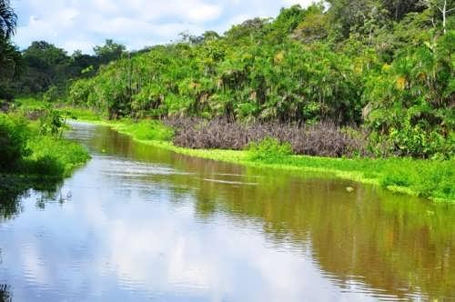 Rainforests of the Amazon