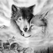 Romantic image of a wolf couple. Gray Wolf in folklore