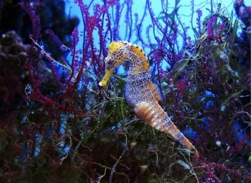 Colorful sea horse