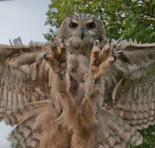 Sharp claws of an owl
