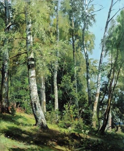Shishkin Ivan. Birch Grove, 1896