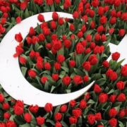 Turkish tulips