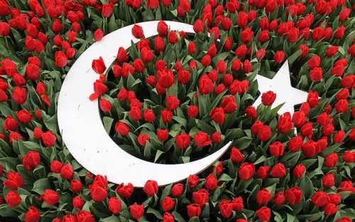 Turkish tulips