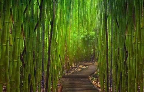 Gorgeous bamboo