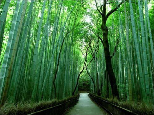 Pretty bamboo