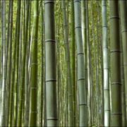 Lovely bamboo