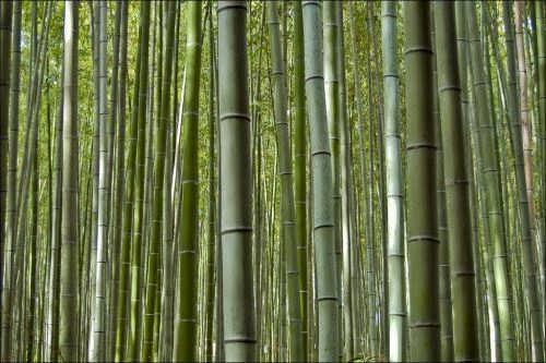 Lovely bamboo