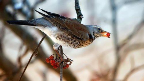 Graceful bird