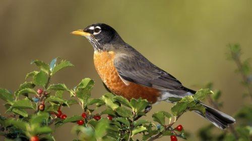 Charming bird