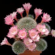 Interesting cactus