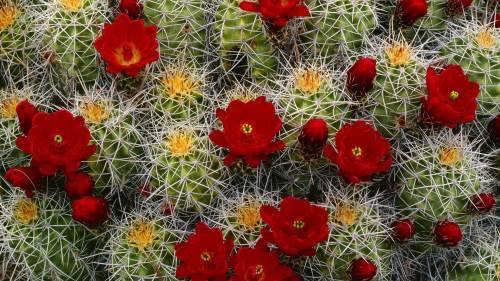Gorgeous cactus