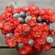 Stunning cactus