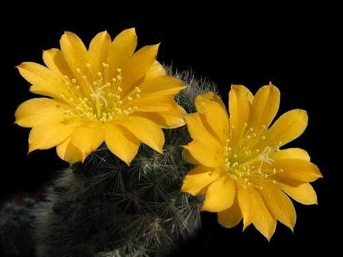 Charming cactus