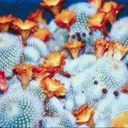 Graceful cactus