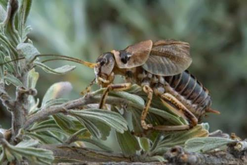 The chirping of crickets is a common sound in the summer
