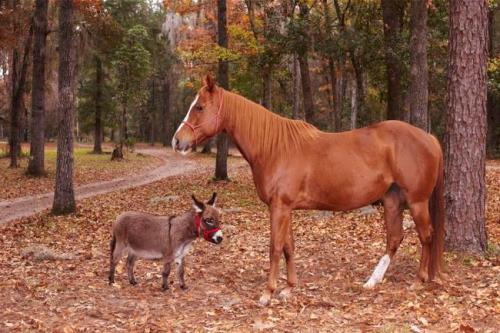 A horse and a donkey