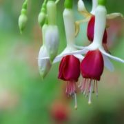 Gorgeous fuchsia