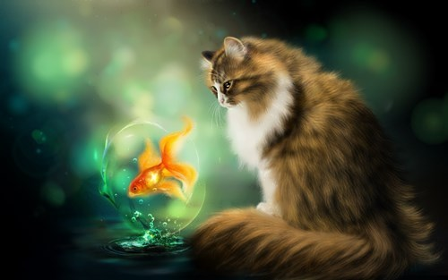 A cat and goldfish