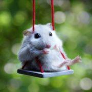 Beautiful hamster