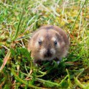 Wonderful rodent