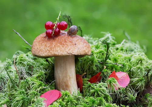 Amazing mushroom