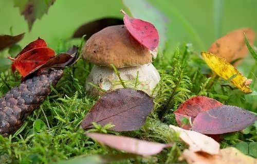 Wonderful mushroom