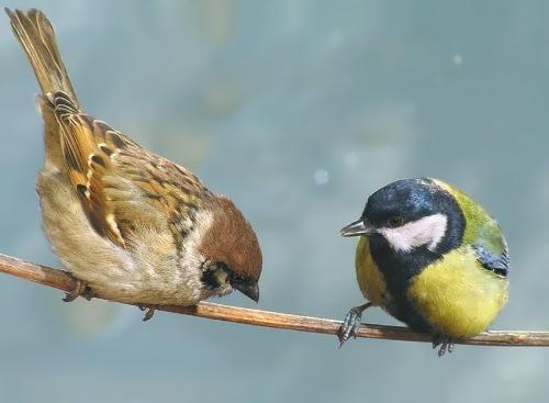 Charming sparrow