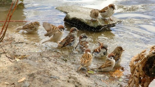Cute sparrows