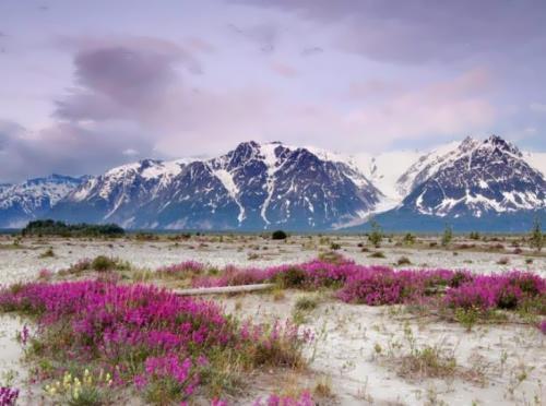 Charming Alaska