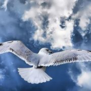 Gorgeous albatross