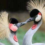 Attractive cranes