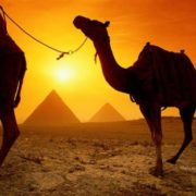 Beautiful camel