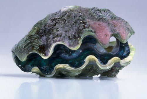 Bivalve mollusks