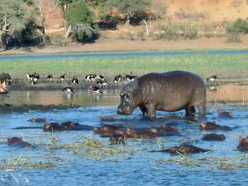 Picturesque Botswana