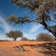 Wonderful Botswana