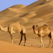 Camel - Packed and Ready to Go