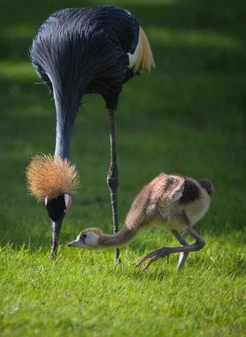 Cute cranes
