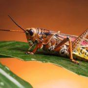 Cute grasshopper