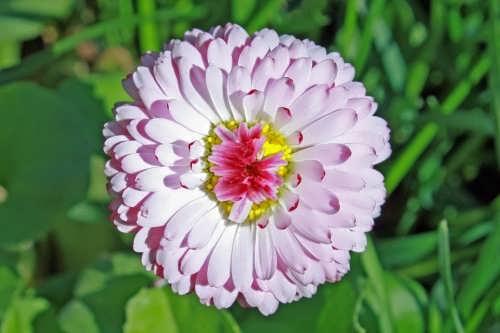 Gorgeous daisy
