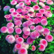 Pretty daisies