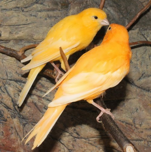 Graceful canaries