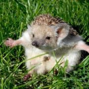 Wonderful hedgehog