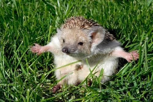 Wonderful hedgehog