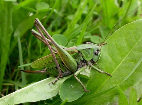 Interesting grasshopper