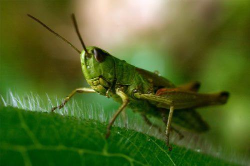 Lovely grasshopper