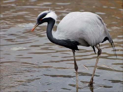 Magnificent crane