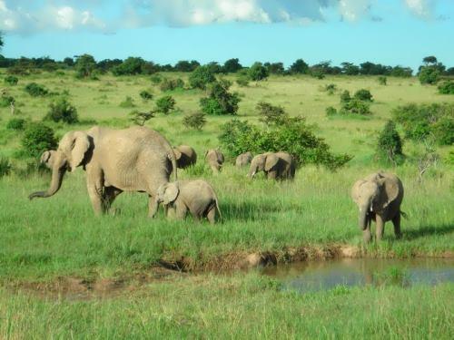 Majestic Kenya