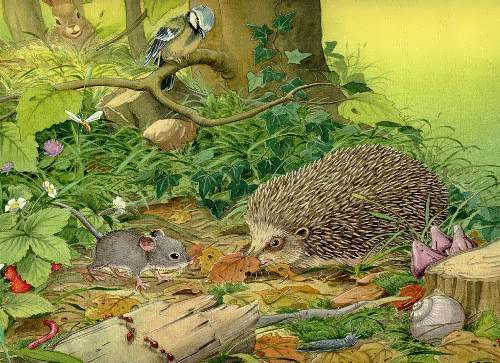 Mouse and hedgehog