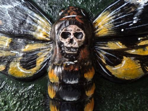 Stunning Death's-head hawkmoth