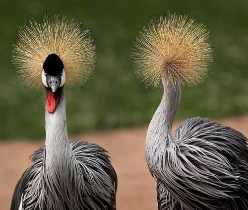 Stunning cranes